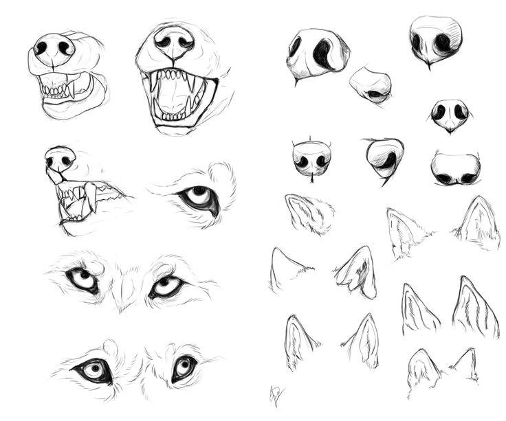 Wolf anatomy study by Esphir.deviantart.com on @deviantART
