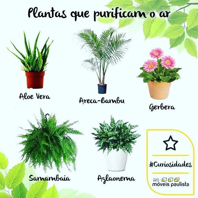 Best 25 plantas purificadoras de aire ideas on pinterest - Plantas de interior purificadoras del aire del hogar ...