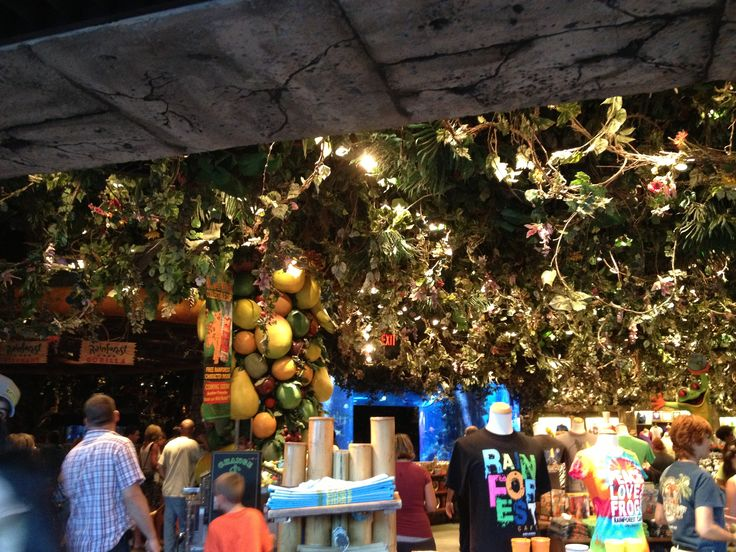 Rainforest Cafe Downtown Disney Closed