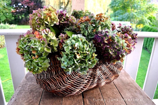 Funky Junk Interiors: how to dry hydrangeas - I love the colors these turned!