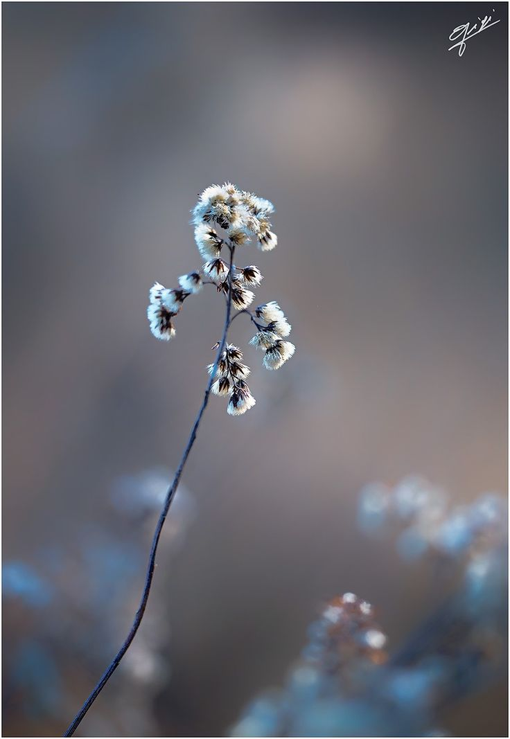 fiori d'inverno by Gigi  on 500px