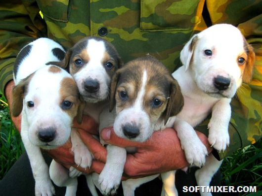 Охотники и ищейки, поводыри и охранники. Собаки - верные друзья человека.