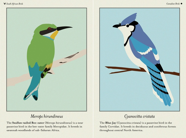 illustrations of a Swallow-tailed Bee-eater and a Blue Jay