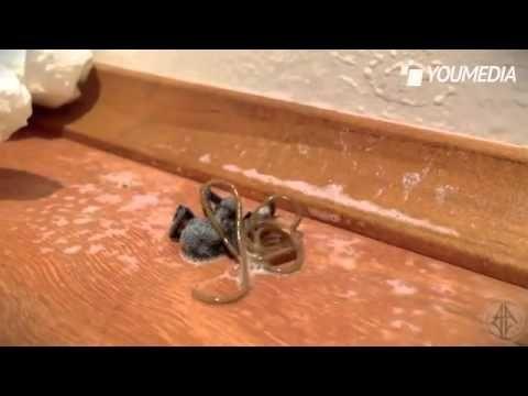uccide il ragno ma dal suo corpo esce qualcosa di incredibile!