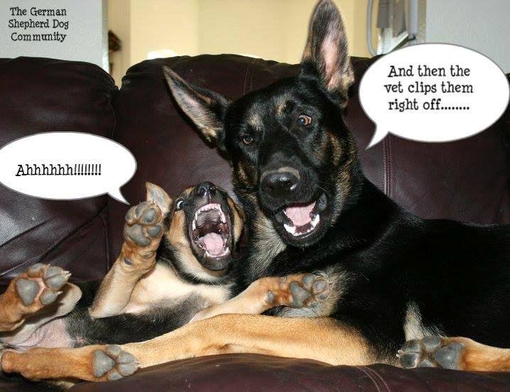 German Shepherd The Best Dog Humor