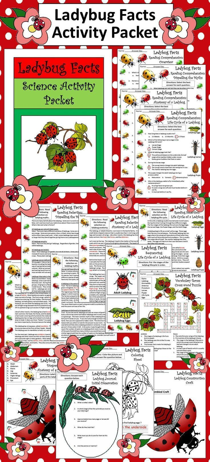 Ladybug Facts Activity Packet: This colorful activity packet explores one of the most beloved insects on Earth, the Ladybug or Ladybird Beetle.  Contents include: * 4 Reading Selections & Quizzes - Overview of the Ladybug, Dispelling the Ladybug Myths, Th
