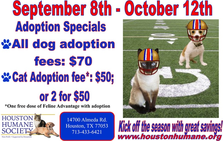 Get out and adopt a new furrr-ever friend!Furrr Ev Friends, Furrrev Friends, New Friends