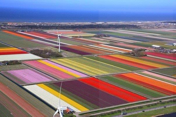 Тюльпановые поля, Голландия