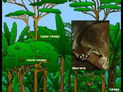 Can your students name all of the layers of a rainforest?  ▶ Layers of a Rainforest - YouTube