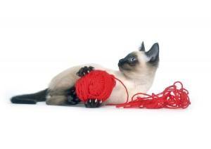 Cómo hacer juguetes caseros para gatos - 5 imágenes