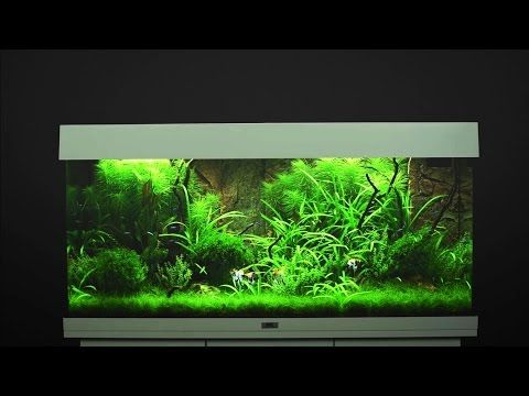 Juwel Aquarium Rio 180 Einrichtungsbeispiel / Tutorial - YouTube Has nice stone backdrop for back of tank that can be cut to accomodate equipment