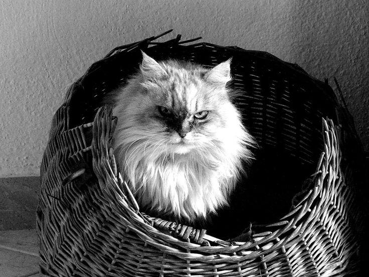 black and white, cat, love
