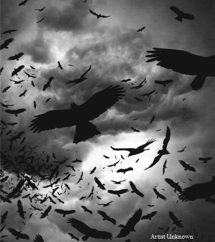 Crows... all other birds are creepy
