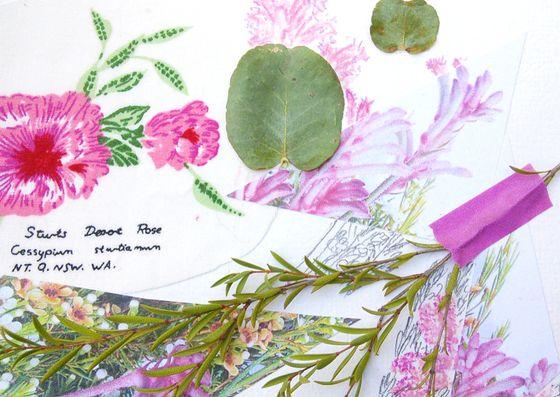 My second botanic collage sample for a children's workshop on Australia Day 2017. Creative Process Workshop.