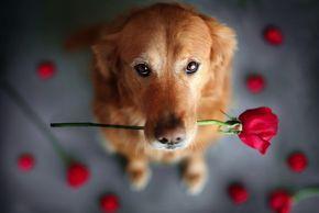 Счастливые собаки. Фотопроект от Jessica Trinh (2)