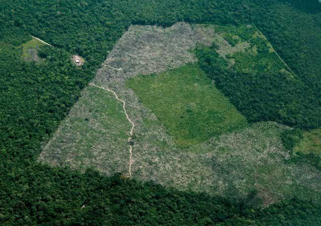 Em 16 anos, desmatamento da Amazônia Legal foi quase o tamanho de SP   Panorama Eco