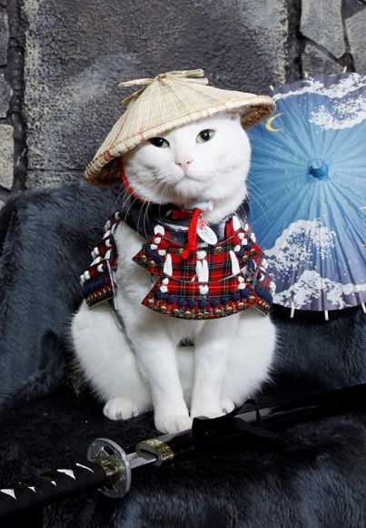 Japanese Store Designs Specially Made Samurai Armor for Cats and Dogs - My Modern Met