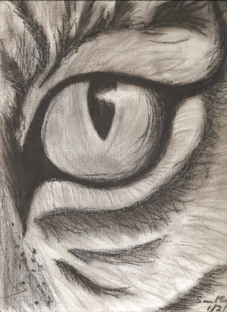 easy animals sketches charcoal - Google Search
