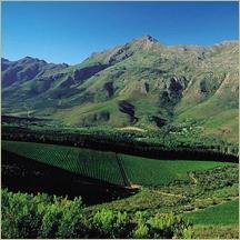 Stellenbosch, South Africa (MAN Vintners)