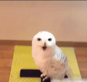 Laughing owl... LMAO!!!
