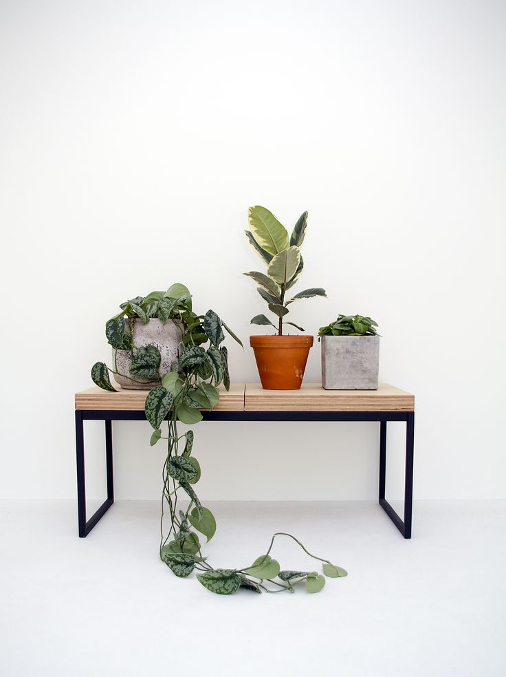 Indoor plants and potted house plants on a bench in a minimal designed white room. Botanical living.