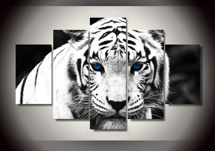 WHITE TIGER BEDROOM IDEAS - Google Search