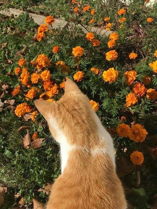 Yellow Roses Tumblr Cat Aesthetic Beautiful Cats Cats