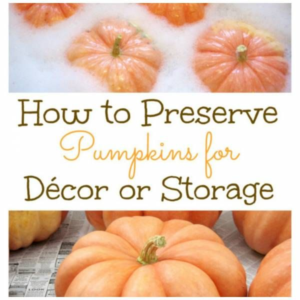 how to preserve pumpkins the right way - How To Preserve Halloween Pumpkin
