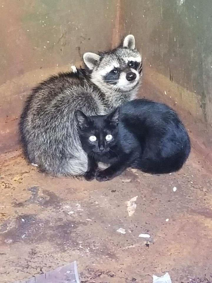 A Knoxville police officer discovered two unlikely companions in a dumpster – a kitten and a baby raccoon.