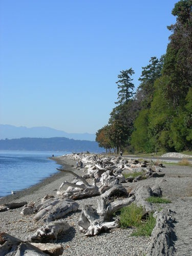 Lincoln Park is a 135 acre park in West Seattle major this multi-purpose park is located on a nose-shaped bluff on Puget Sound just north of the Fauntleroy Ferry Terminal. running & bike trails, outdoor heated saltwater pool & more! Seattle