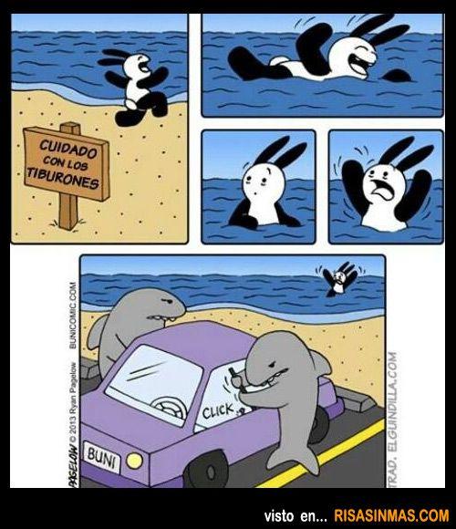 Cuidado con los tiburones