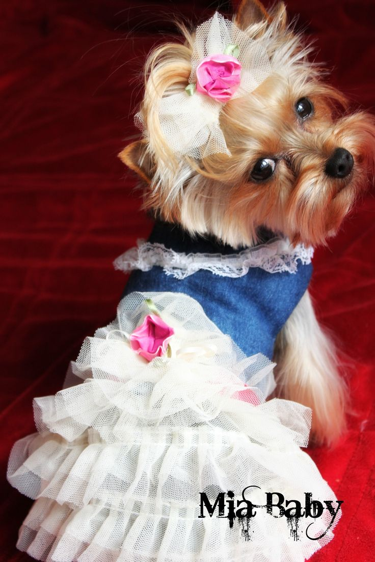 1793 best images about Yorkie Dreaming on Pinterest ...