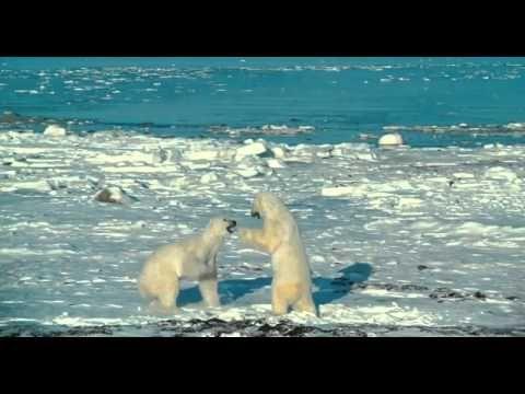 Arktida 3D (2012) - trailer