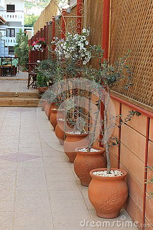 Olives in clay pots used as decor at a little restaurant in Hersonissos. Crete, Greece