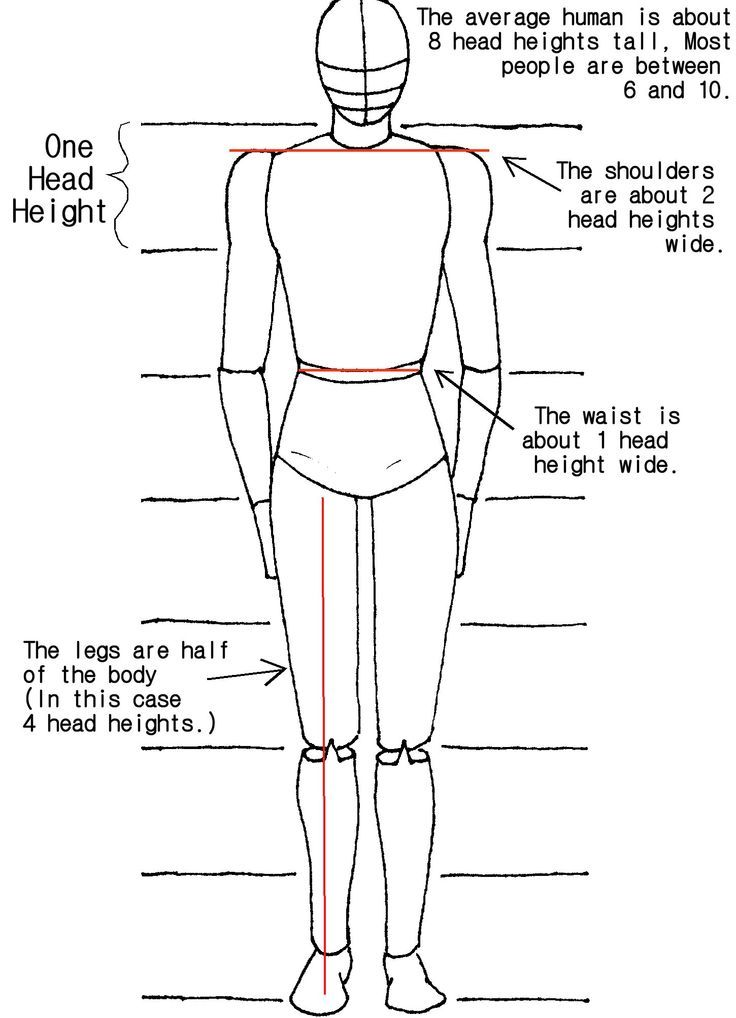 step by step worksheet how to draw the human body