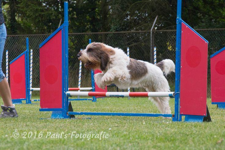 Gbgv jumping #agility