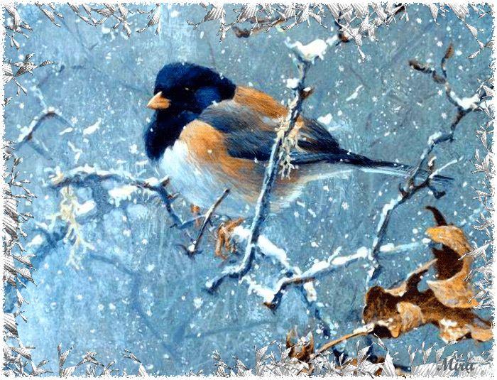 Sinichka  Bird You Very Much Mira