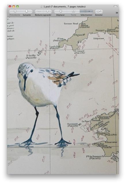 bécasseau peint sur carte ancienne