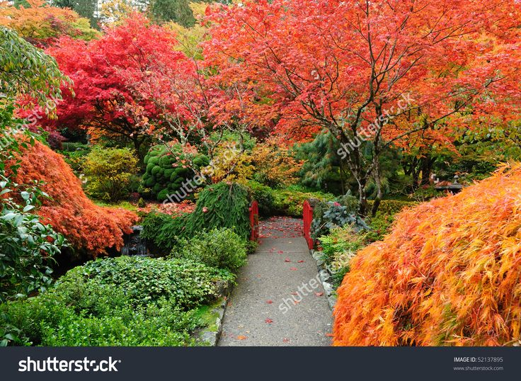 The Autumnal Look Of The Japanese Garden Inside The Famous Historic Butchart Gardens (Built In 1903), Vancouver Island, British Columbia, Canada Foto d'archivio 52137895 : Shutterstock