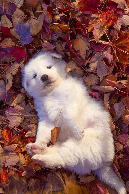 May be the cutest fall leaf puppy pic everrrrrr!!!!