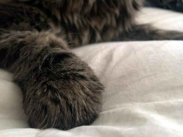 Kitty paw ♥: Kitty Paw