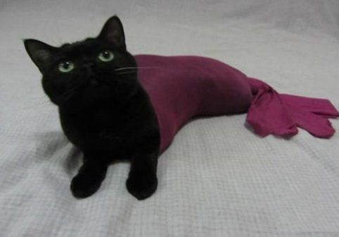 猫に人魚のコスチュームを着せてみたら…モーレツにかわいい写真12枚:らばQ
