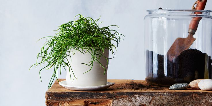 How to bring a dying house plant back from the brink.