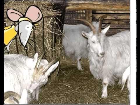 Zwierzęta z wiejskiego podwórka