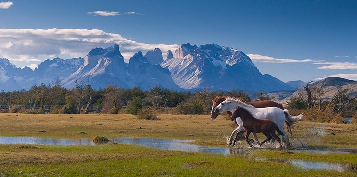 Running horses near Torres del Paine National Park, Patagonia, Chile.