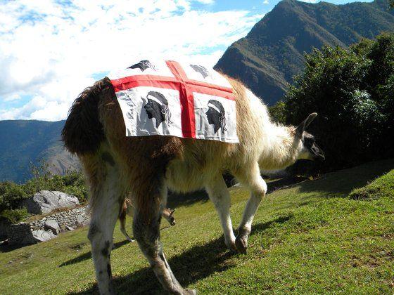 """Il lama sardo"" del turistapercaso Murdegu (Perù, Macchu Picchu)"