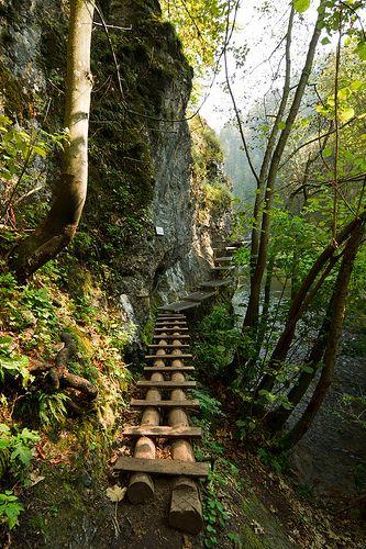 The wooden path in Slovenský Raj National Park, Slovakia