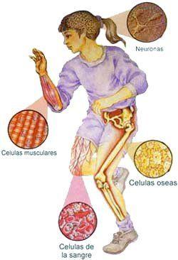 Aquí hay una de las fotos de las células de nuestro cuerpo humano y espero que lo disfruteis.Estefanía Meibi.