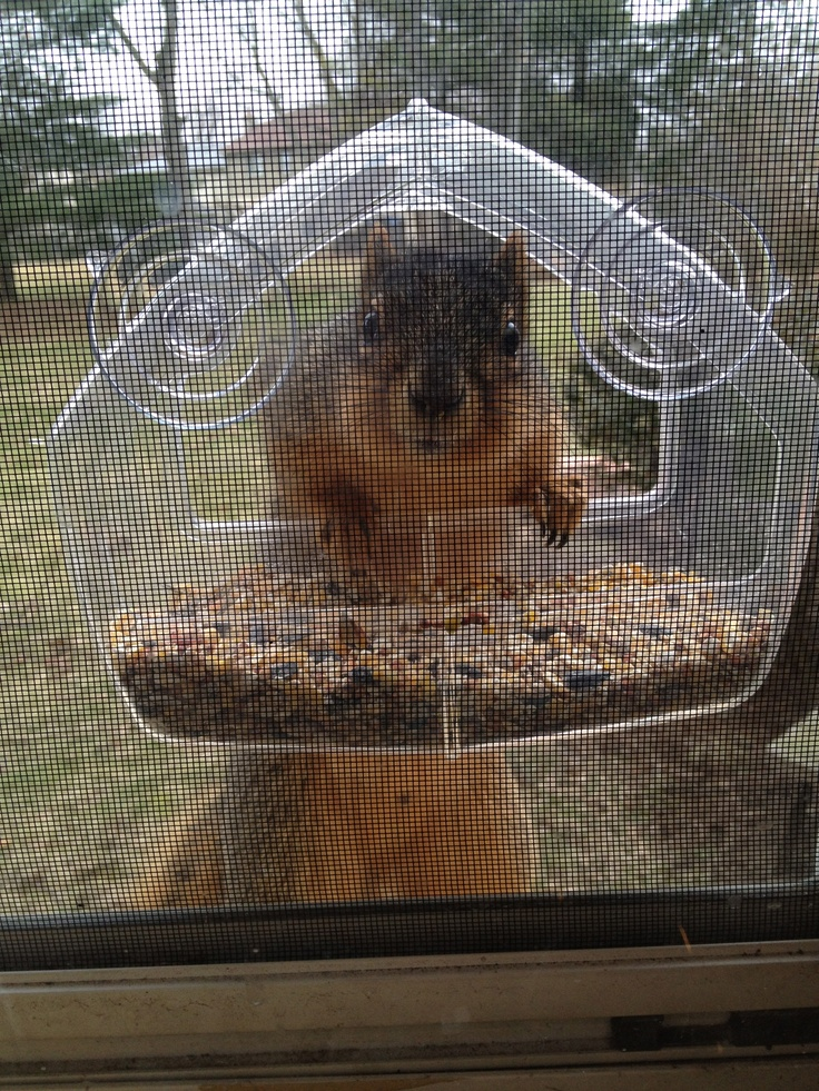 10 Best Images About Suction Cup Bird Feeder On Pinterest