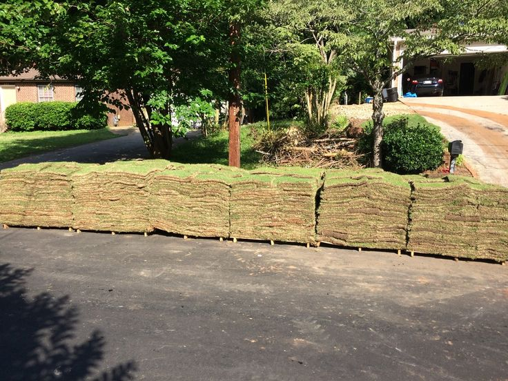1000 Images About Zoysia On Pinterest Emeralds And Pallets